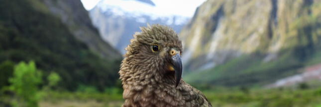 Si les humains vivaient comme des perroquets…