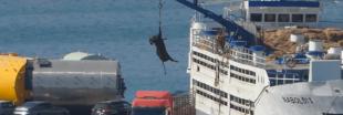 PETA lève le voile sur la cruauté de l'industrie du cuir