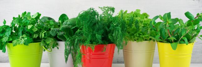 Comment conserver les plantes aromatiques tout en gardant leur saveur