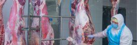 Covid-19: les abattoirs français dans le viseur du Conseil scientifique