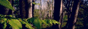 Dans les Pyrénées, un projet de scierie géante menace les forêts de hêtres