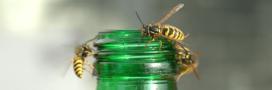 Les bons réflexes à avoir quand abeilles, frelons et guêpes vous titillent