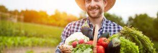 Cuisinez les fruits et légumes de saison en août : le panier AMAP