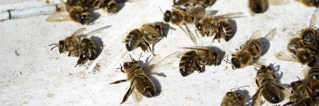 Pourtant interdits en 2018, les insecticides néonicotinoïdes sont de retour !