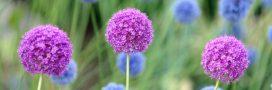 5 plantes qui ne nécessitent presque pas d'être arrosées