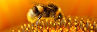 Insecticide, pollution de l'air : les abeilles agonisent