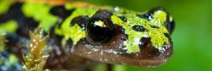 Il est temps d'agir pour les amphibiens de France !
