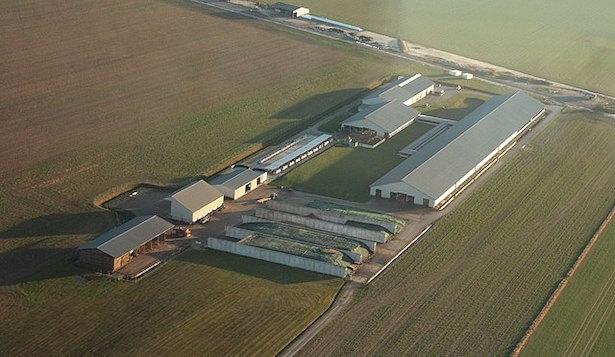 ferme-usine des mille vaches