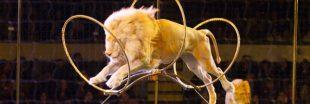 Cirque : vers la fin de l'exploitation des animaux sauvages ?