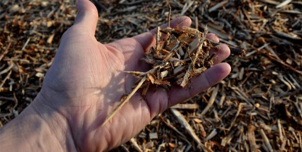 bois raméal fragmenté