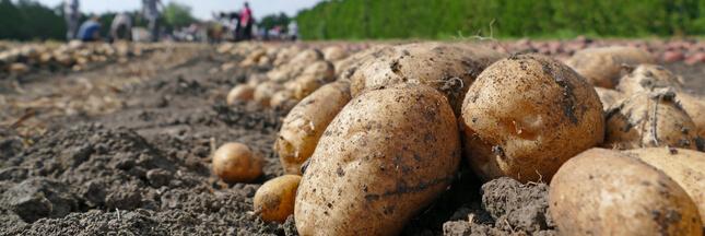 Bretagne: du cadmium un poison trop fréquent dans les légumes