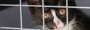 Plus de 8.000 abandons cet été :  la SPA lance le 'Mois de l'adoption'
