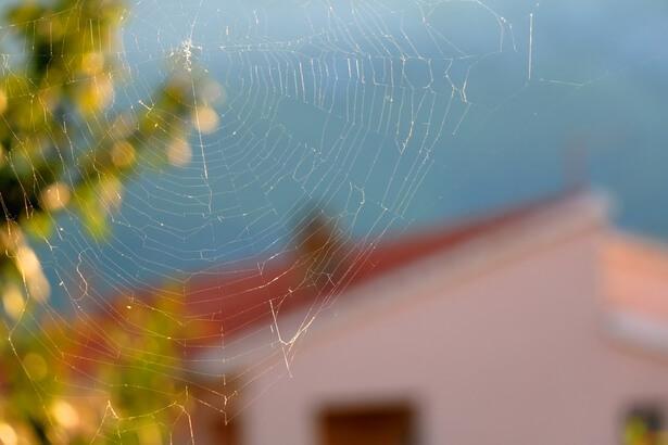 contre les araignées