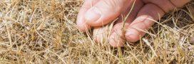 Potager: Comment réparer les dégâts de l'été