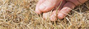 Potager : Comment réparer les dégâts de l'été