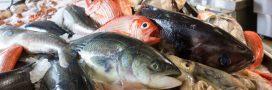 Le poisson que vous mangez est-il une espèce en danger critique ou menacée?
