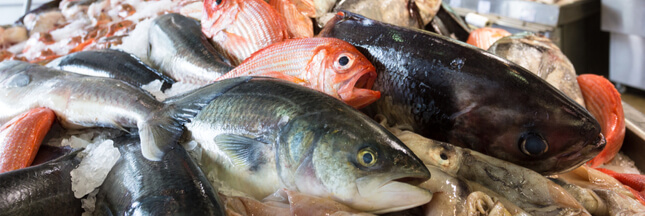 Le poisson que vous mangez est-il une espèce en danger critique ou menacée ?