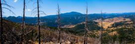 Les forêts brûlées ne pousseront plus jamais à l'identique