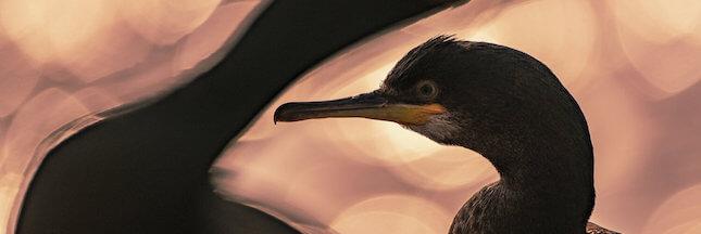 5 clichés sublimes des gagnants du 'Bird Photographer of the Year' 2020