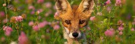 Indice Planète Vivante WWF 2020: l'Humanité ne peut plus ignorer l'écocide en cours