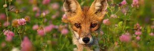 Indice Planète Vivante WWF 2020 : l'Humanité ne peut plus ignorer l'écocide en cours