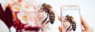 Les smartphones en cause dans la mortalité des insectes