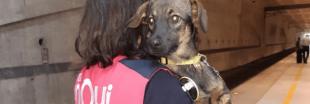 1000 animaux adoptés en un an grâce aux anges du Rail de la SNCF