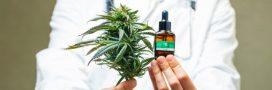 Cannabis médical: la France va enfin commencer à expérimenter