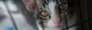 Commerce d'animaux vivants : des milliers d'animaux morts dans des colis en chine