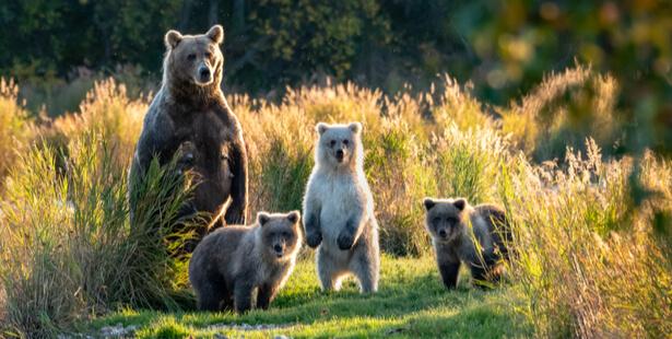 eco tourisme alaska