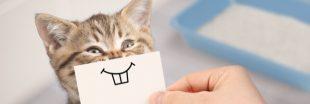 Comment lutter contre les mauvaises odeurs de la litière du chat ?