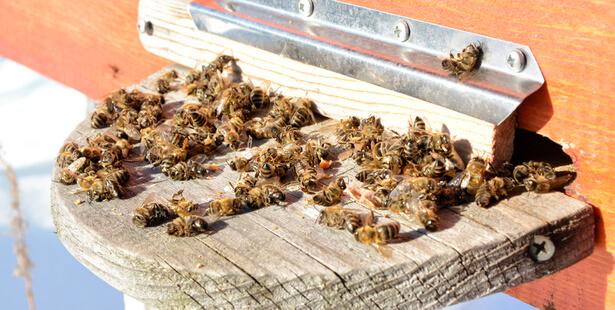 néonicotinoides abeilles