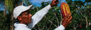 Cacao : des prix en hausse pour mieux rémunérer les producteurs africains