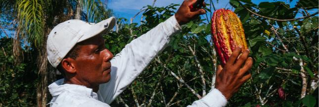 Cacao: des prix en hausse pour mieux rémunérer les producteurs africains