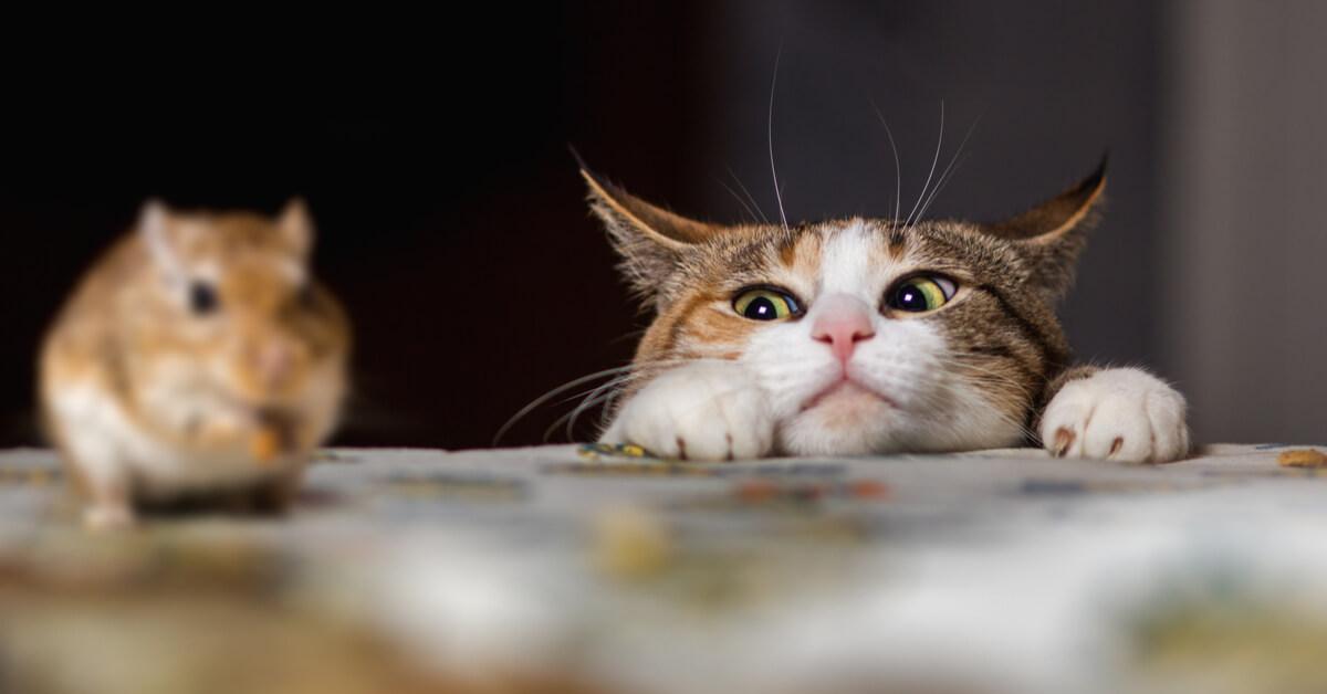 8 astuces naturelles contre les souris