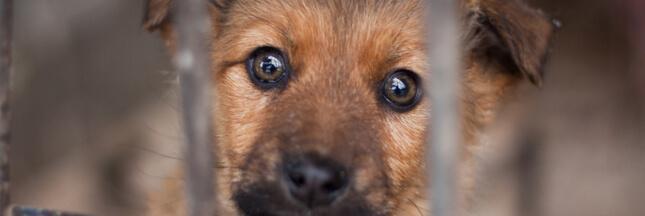 Pétition  #StopAnimalObjet – Les animaux de compagnie ne sont pas des marchandises!