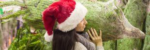 Les sapins de Noël pourront être achetés dès vendredi
