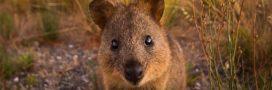 6 espèces qui vont probablement disparaître à cause de nous!