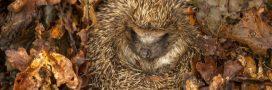 Comment se passe l'hiver pour les animaux qui hibernent?