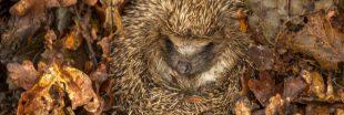 Comment se passe l'hiver pour les animaux qui hibernent ?
