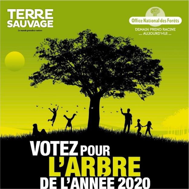 arbre de l'année 2020