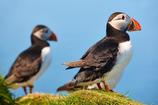 biodiversite oiseaux