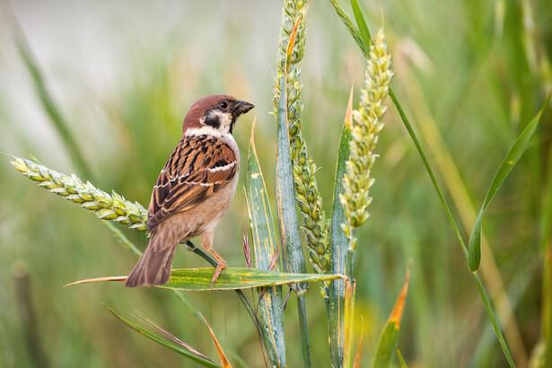 declin oiseaux