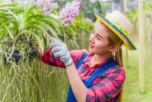 entretien orchidée