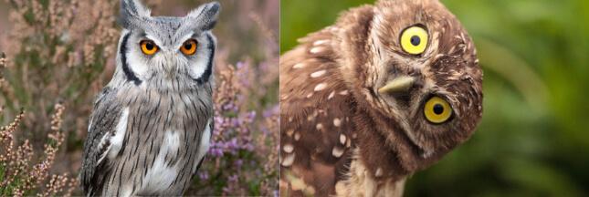 12 animaux que l'on confond régulièrement