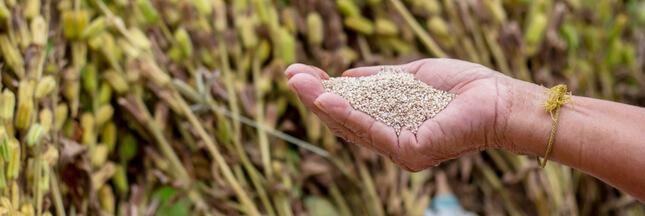 Pesticide interdit: 250 tonnes de sésame contaminées et de nombreux produits rappelés