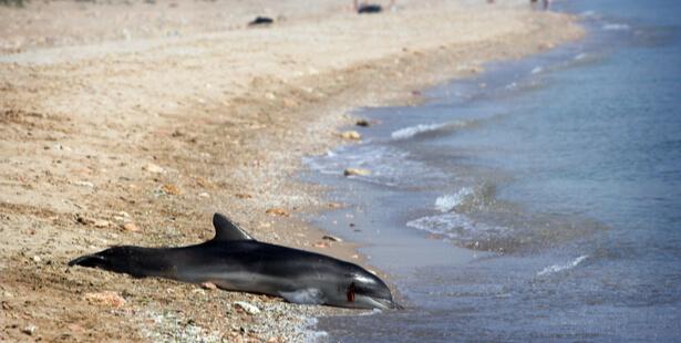 dauphins changement climatique