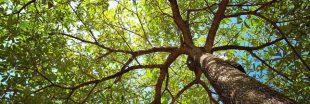 Les arbres, un bouclier contre le réchauffement climatique mais à quel prix ?