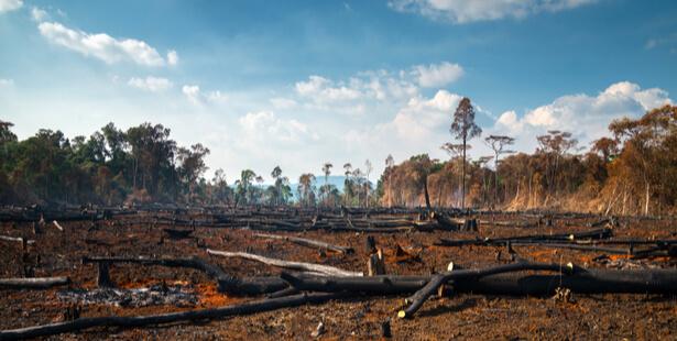 forêts changement climatique