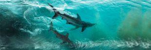 Les 7 gagnants du Ocean Photography Awards 2020